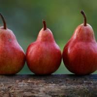Veganic Forest Gardening